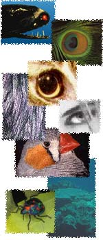 Collage of images of eyes and animal colour patterns.
